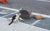 Abandonan un gato en la calle