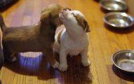 Cómo Cuidar Perros Recién Nacidos