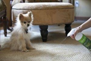 Cómo Eliminar El Olor de Nuestros Perritos En La casa