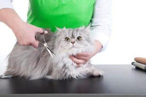 Cortar El Pelo A Un Gato