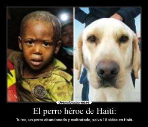El Perro que Salvó 18 Vidas