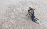 Leo el perrito paralítico
