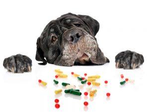 Mi Perro Necesita Tomar Vitaminas