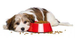 Motivos Principales Que Acortan La Vida De Tu Perro