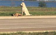 Perro No Quiere Separarse De Su Amigo Muerto