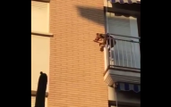 Perro salta de un tercer piso