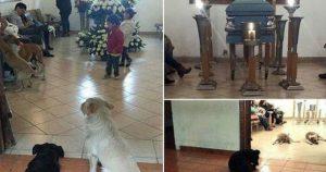Perros callejeros asisten al funeral de una mujer
