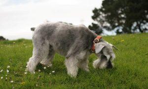 Por Qué Motivo Los Perros Comen Hierba