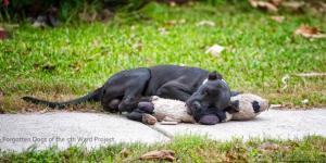 Un Pitbull Se Queda Sin Casa Y Se Aferra A Su Único Amigo, alimentar a perros, perros, abandonados, hogares temporales, rescatado, pitbull, muñeco de peluche, hogar, foto