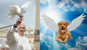 animales van al cielo