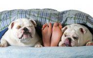 Es Bueno Dormir Con Su perro
