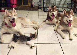 Gatita Fue Adoptada