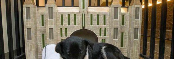Hotel Da Posada Para Perros De La Calle