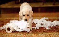 Los Perros Comen Papel De Baño