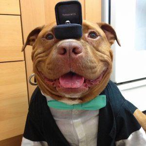meaty-el-perro-que-no-deja-de-sonreir-despues-de-ser-adoptado1