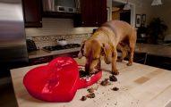 Mi Perro Puede Comer Dulces