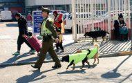 Policías Chilenos Adoptan Perros Callejeros