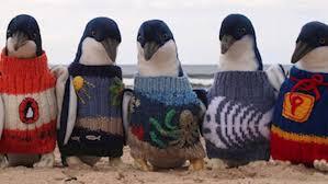 Un hombre Teje Pequeños Abrigos Para Ayudar Pingüinos