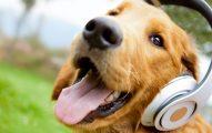 Musicoterapia para sus mascotas