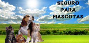 Seguro ´para Mascotas