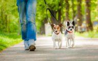 La Displasia De Cadera En Los Perros