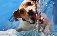 hidratación de tu mascota
