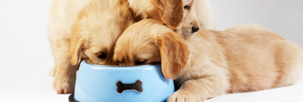 La Dieta En Perros