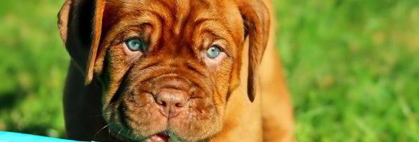 Antioxidantes Para Perros