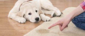 como-podemos-educar-a-un-cachorro2