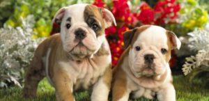 Las Enfermedades Más Comunes Del Cachorro