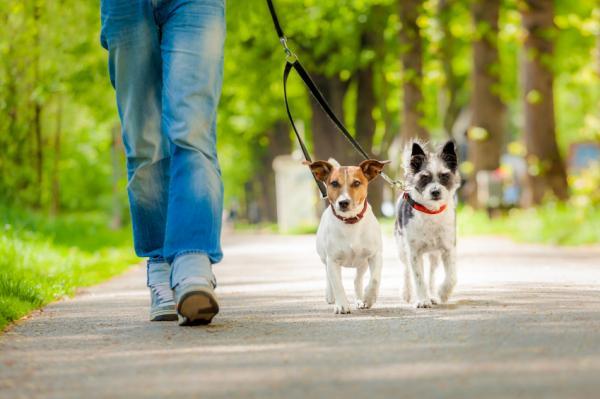 Mi Perro no Quiere Caminar ni Comer