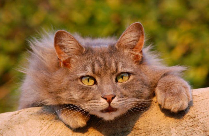 Mi Gatito No Quiere Comer Y Respira Muy Rápido