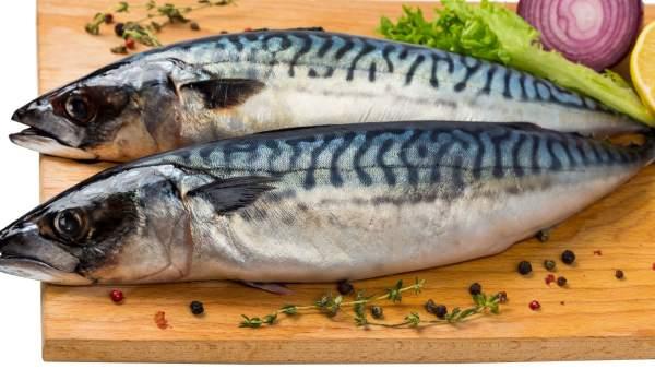 Los Perros Pueden Comer Pescado Y Mariscos