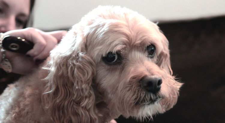 Los Cachorros a los Cuantos Días se Pueden Bañar