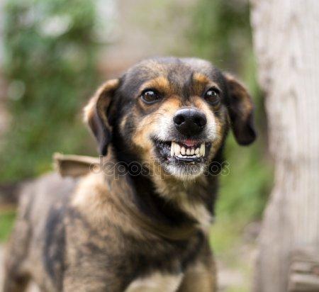 Que Puedo Hacer Si Mi Perro Se Está Volviendo Agresivo