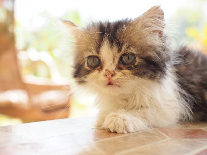 Cuando Empiezan A Comer Los Gatitos Bebes ?