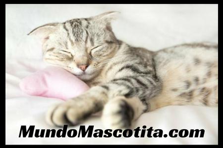 Cuanto Duermen los Gatos Adultos y Pequeños