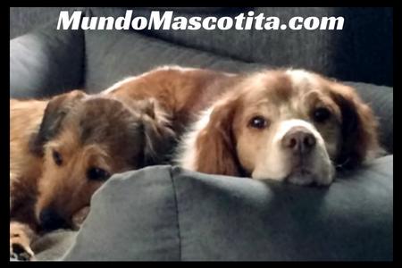 Información Sobre el Perro