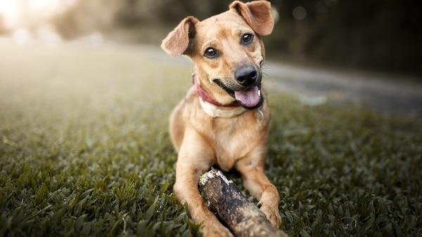 Inseminacion Artificial Perros Precio