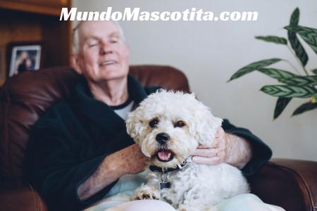 Perros para Personas Mayores Ideales