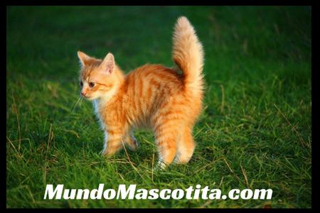 Síntomas del Moquillo en Gatos