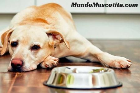 A mi Perro le Suenan las Tripas y no Quiere Comer