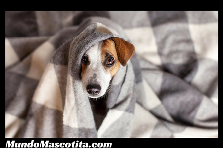 Ataques De Epilepsia En Perros