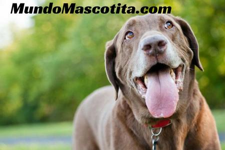 Como Relajar a un Perro Hiperactivo o con Ansiedad