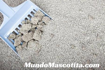 Mejor Arena Biodegradable para Gatos