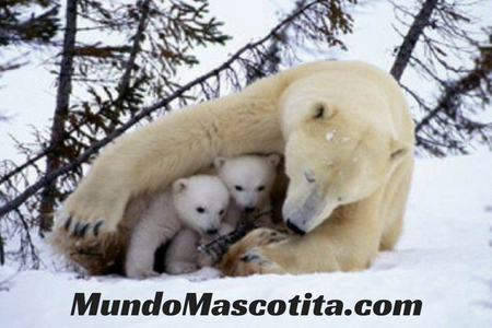 Oso Polar Hábitat Alimentación y Reproducción