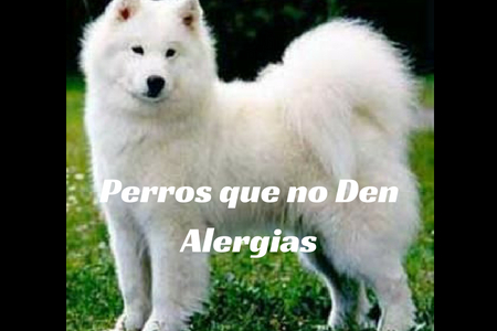 Perros que no Den Alergias
