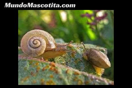 Tipos de Respiración en los Animales Vertebrados e Invertebrados
