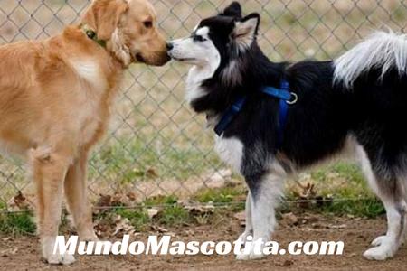 Tranquilizante Natural para Perros en Celo