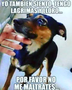 Información Sobre el Maltrato Animal de los Perros